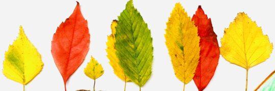 Blätter als Herbstbäume