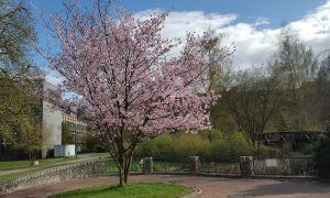 Frühling Campus